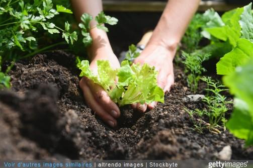 Le jardinage c est bon pour la sant for Jardinage le monde